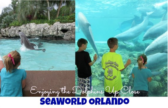 Best things to do at SeaWorld Orlando