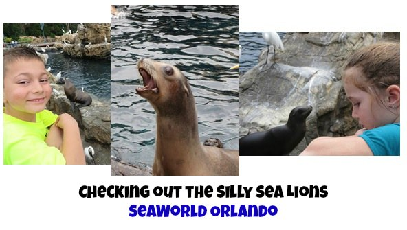 Things to do at SeaWorld Orlando