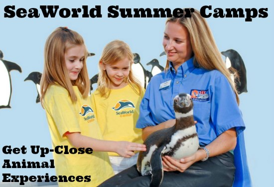 SeaWorld Summer Camps #Orlando