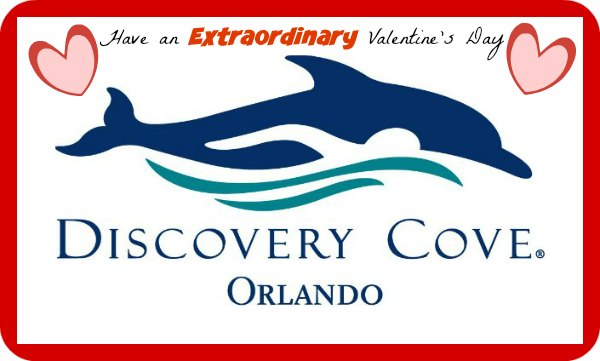 Discovery Cove Valentine's Day Packages