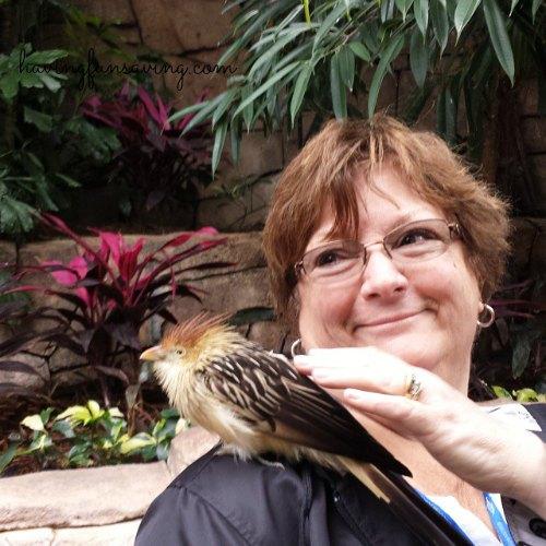 Bird Aviary at Discovery Cove Orlando
