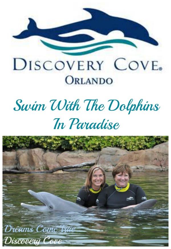 Discovery Cove Orlando Dolphin Swim