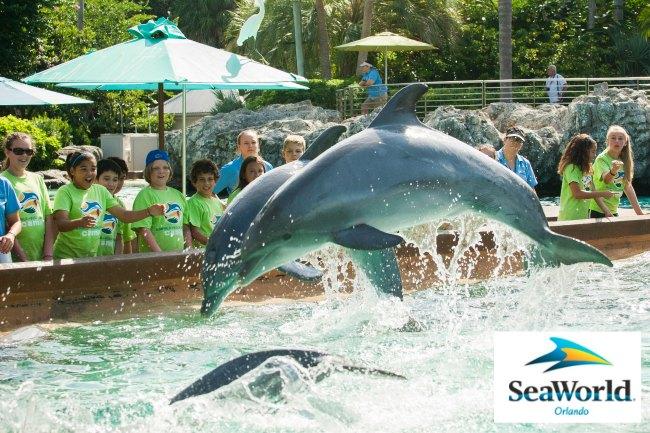 Summer Camps at SeaWorld
