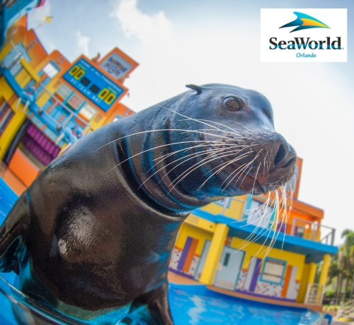 Clyde and Seamore's Sea Lion High Opens in Orlando