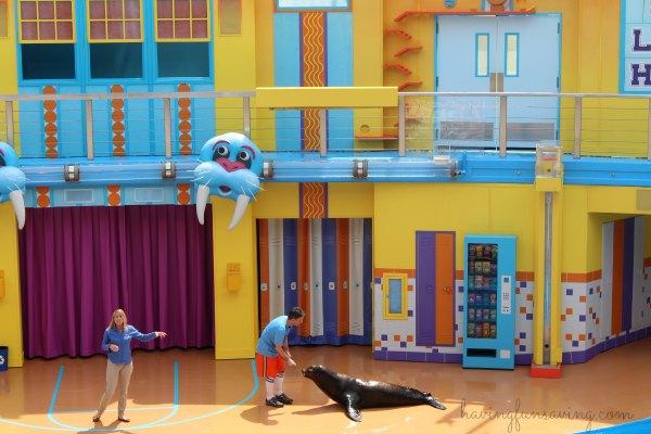 Sea Lion High at SeaWorld Orlando