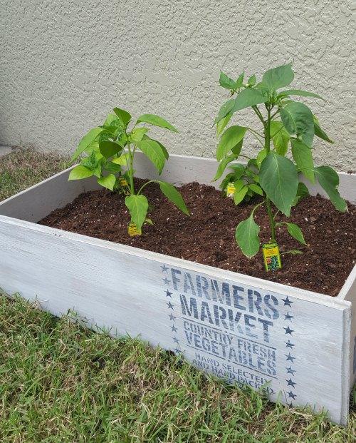 Simple diy garden boxes