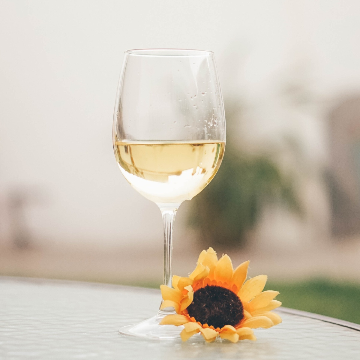 Introduction To Sauvignon Blanc White Wine