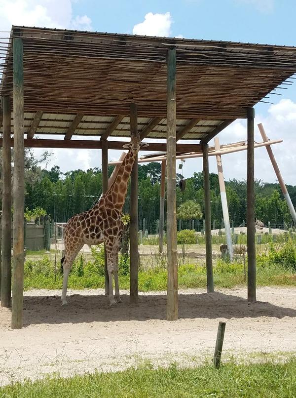 Tampa zoo Roaring Springs Ride