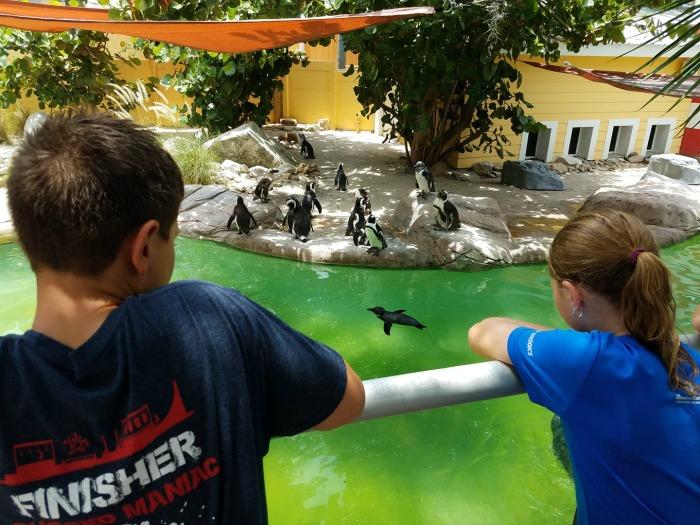 Roaring Springs Zoo Tampa at Lowry Park