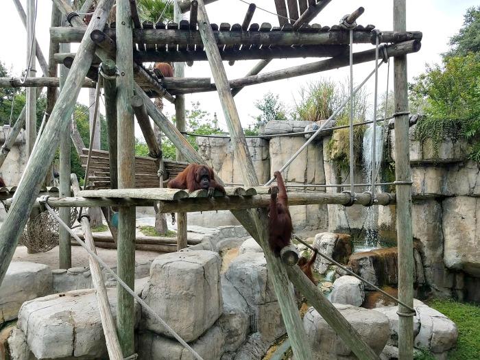 Roaring Springs Ride at Zoo Tampa
