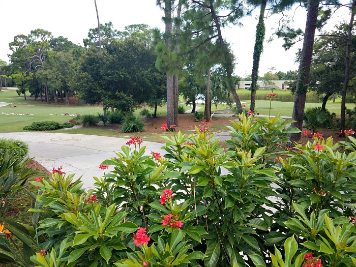 Best Things To Do at Innisbrook Resort