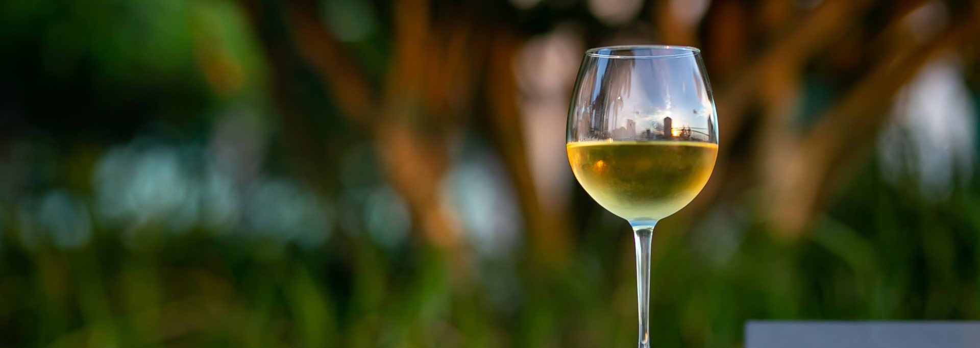 Intro to Chardonnay Feature