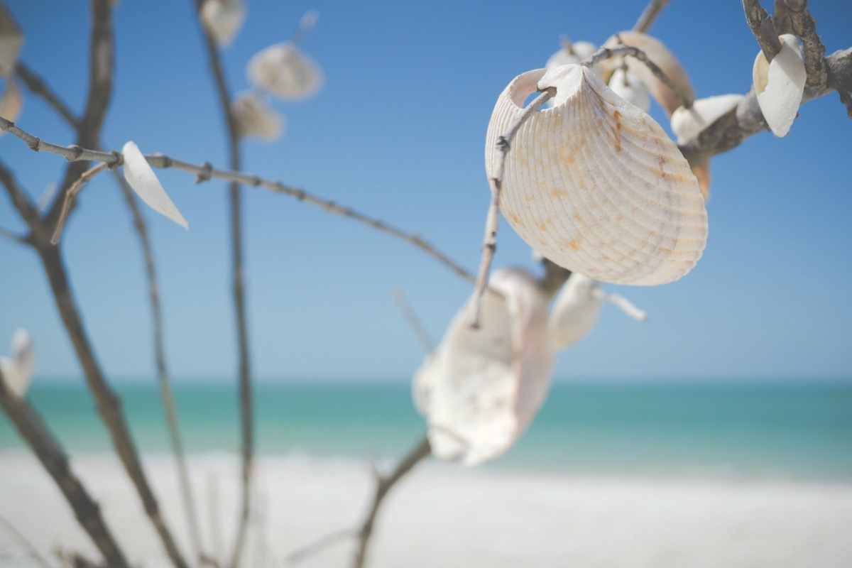 Best Things To Do In Clearwater Florida