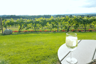 Best Michigan Wineries