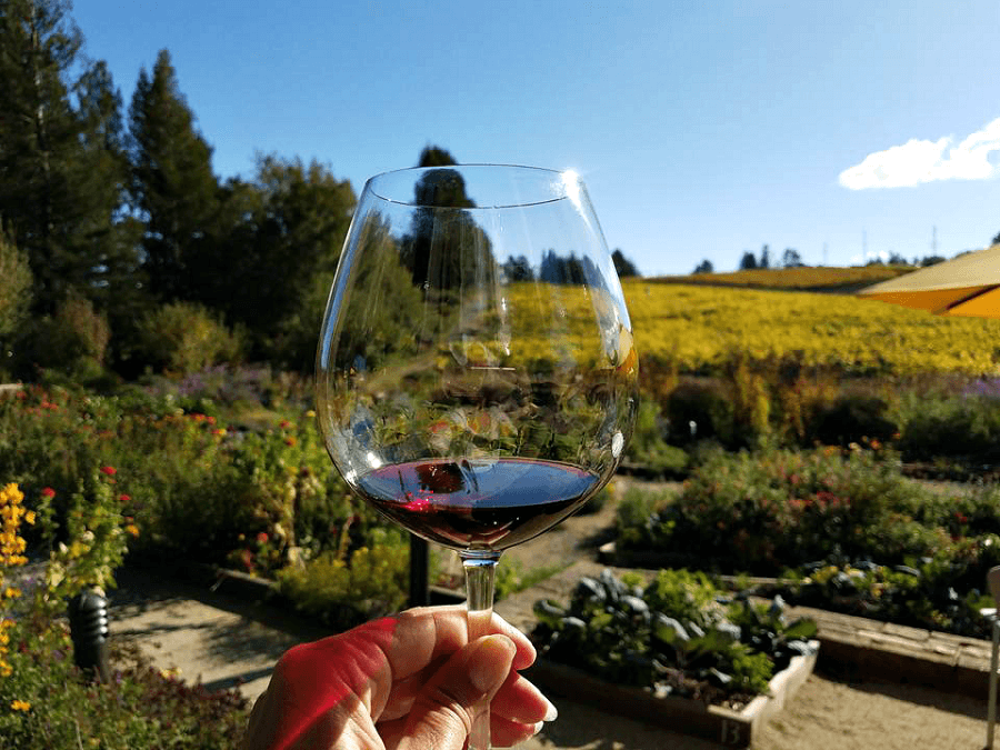 Top 5 Sonoma Wineries to Visit