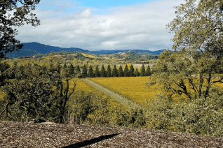 Top Sonoma Wineries