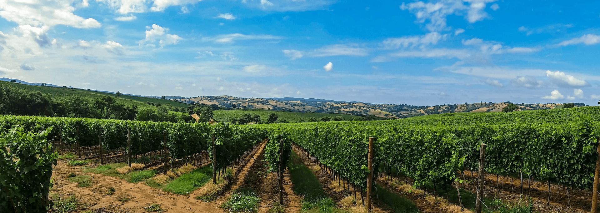 Popular Wine Regions