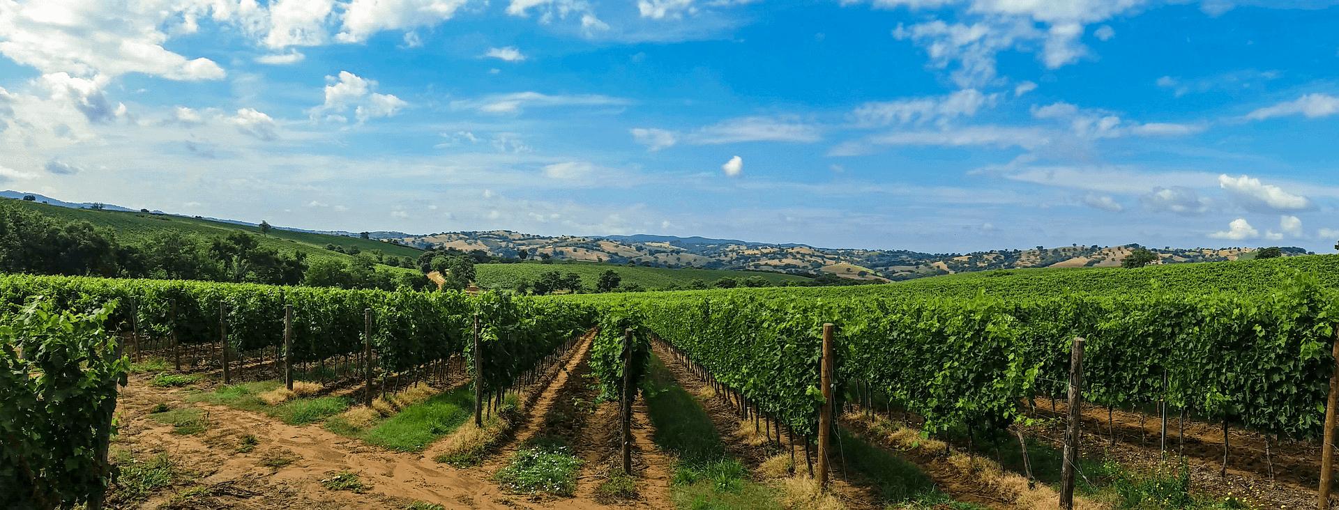 Top Global Wine Regions