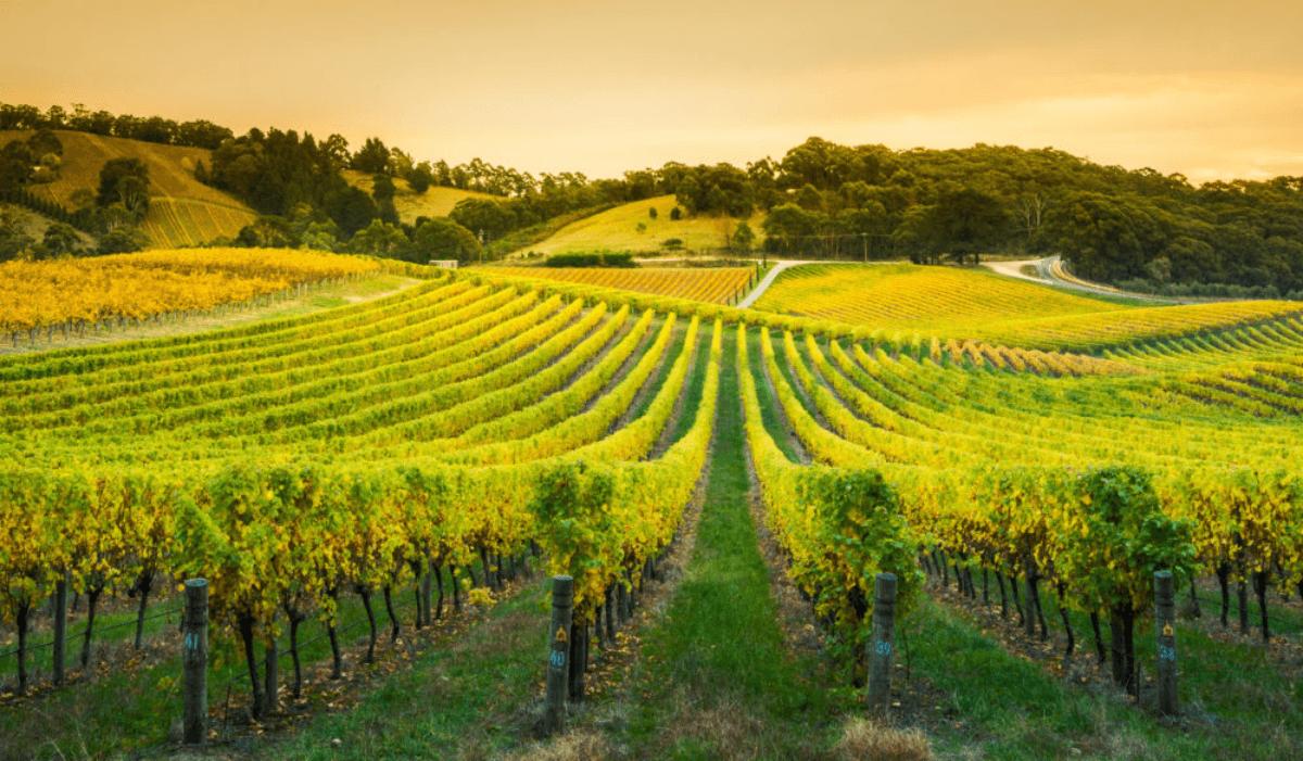 Most Popular Wine Regions around the world