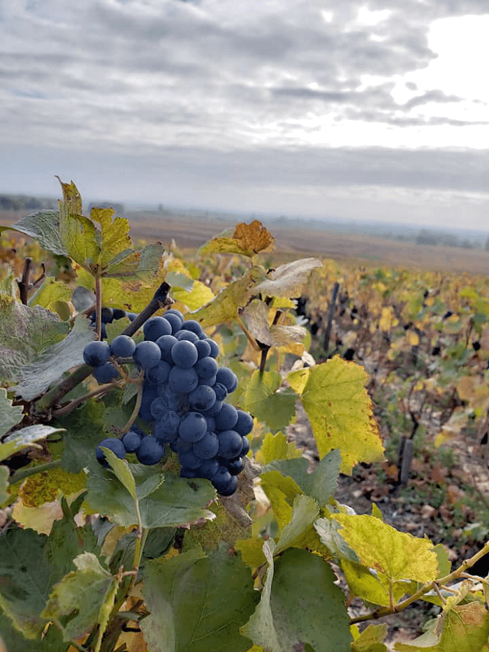 What to do in Beaune France