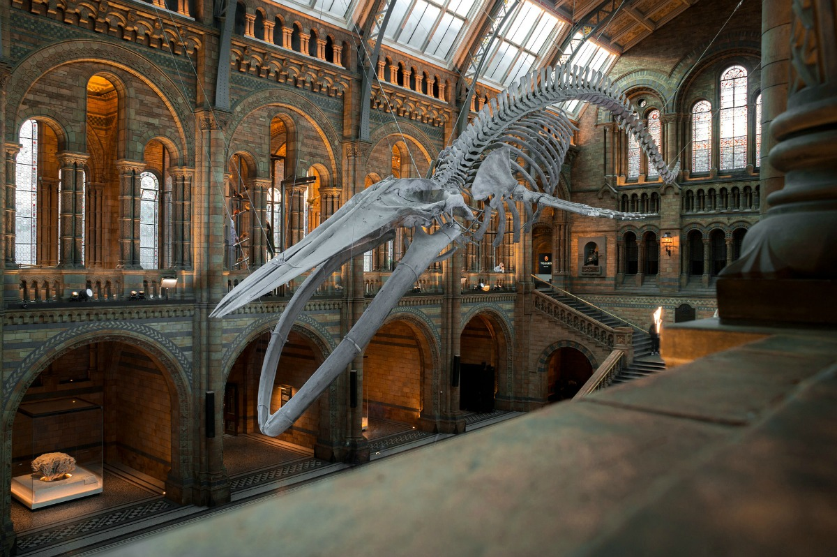 Best Free Museums In London