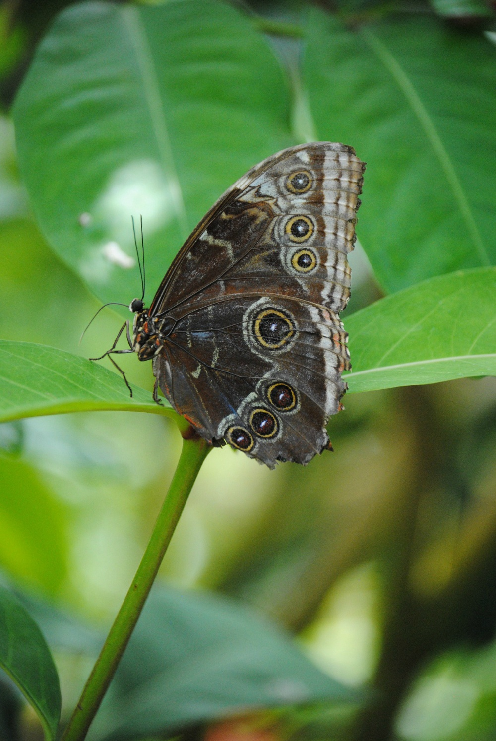 Things To Do In Key West Butterfly Garden