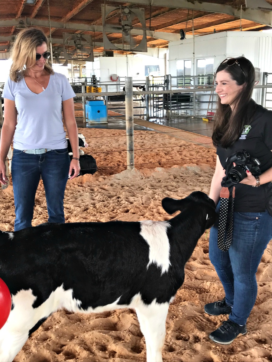 Where Does Milk Come From? Florida Dairy Farmers