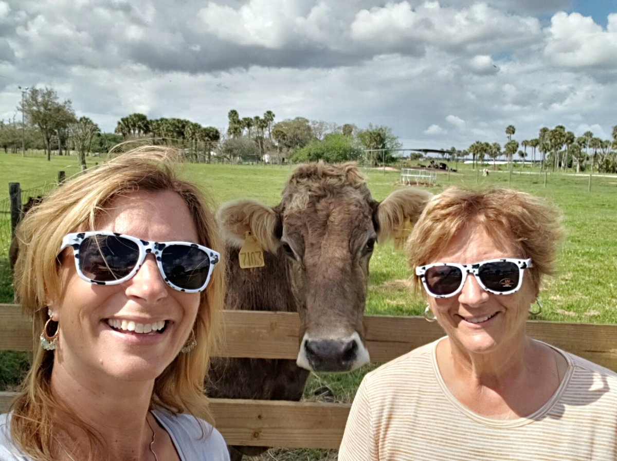Where Does Milk Come From? Cow Selfie