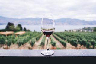 Guide To Zinfandel Wines