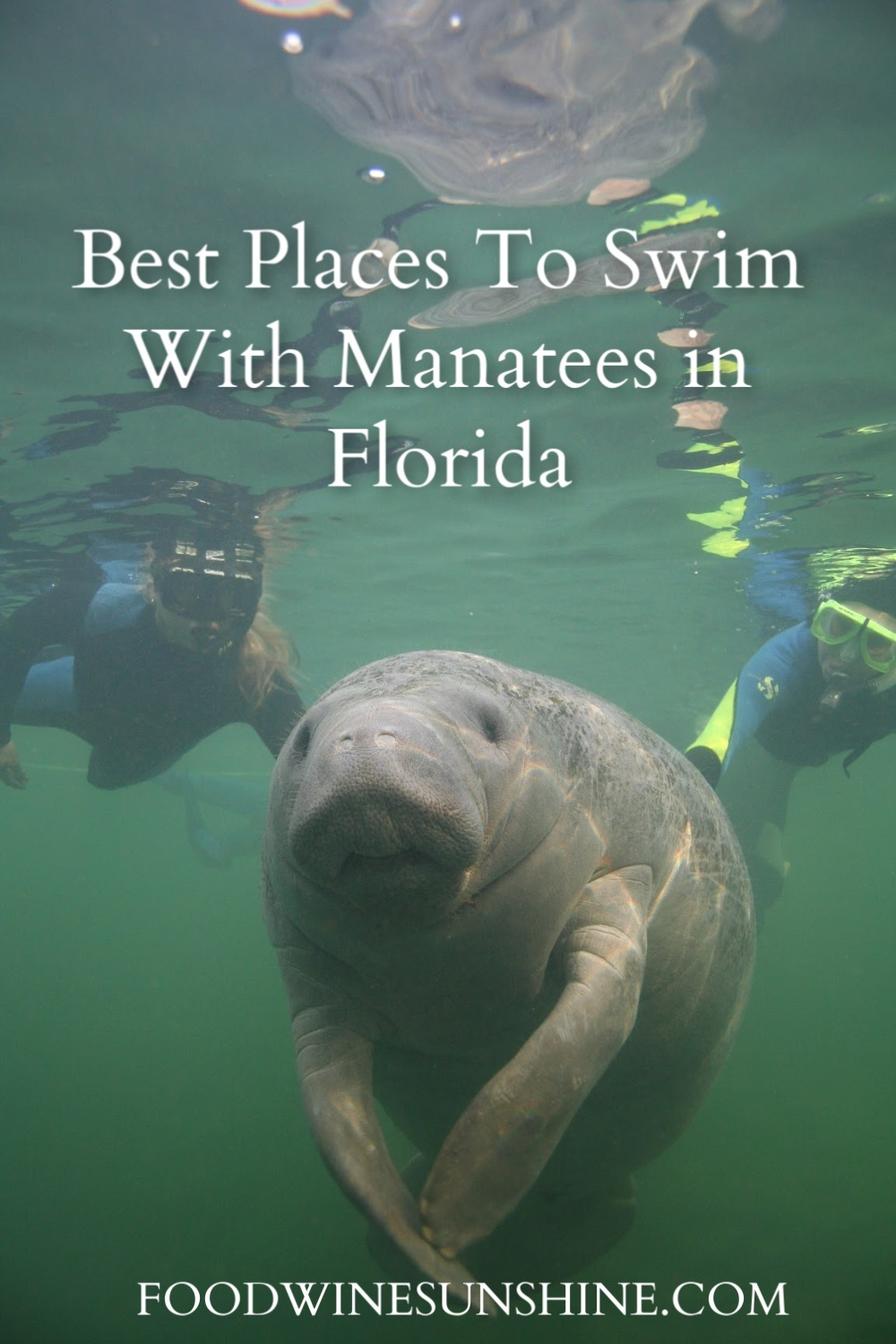 Best Places To Swim With Manatees in Florida