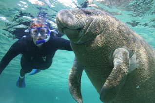Swim with manatees plantation on crytsal river