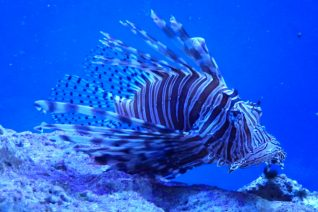 Things To Do In Key Largo Lionfish