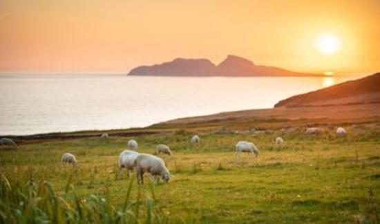 Best Ireland Taste The Island Events & Festivals