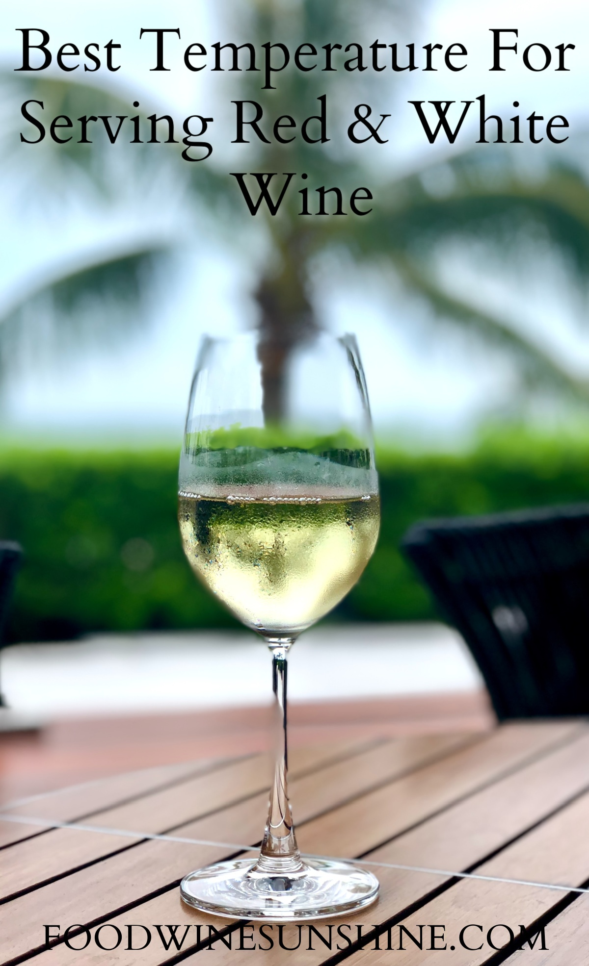 Best Temperatures For Serving Red & White Wine