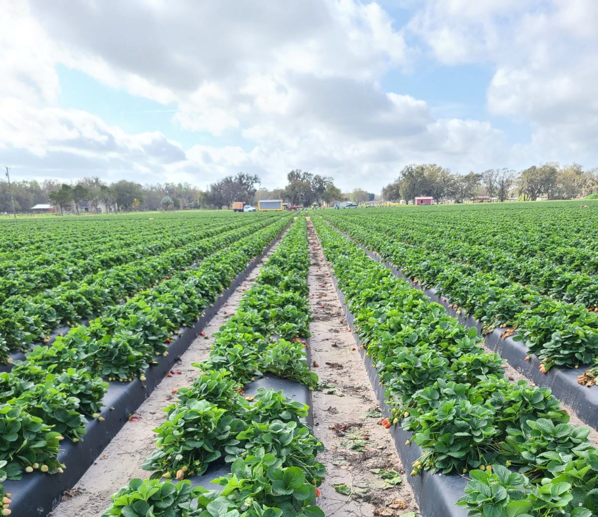 Learn about Florida Fruit and Vegetable Association
