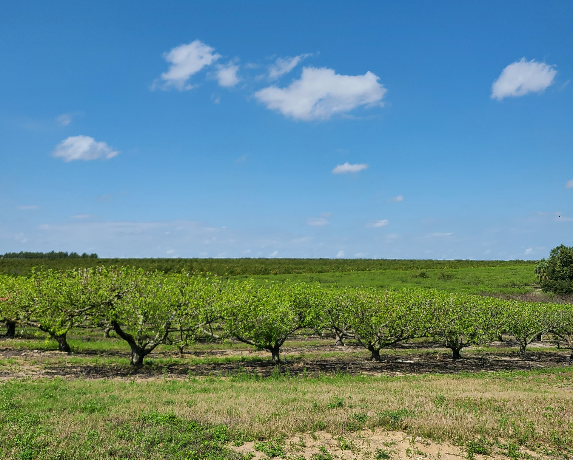 Top Things To Know About Florida Agriculture