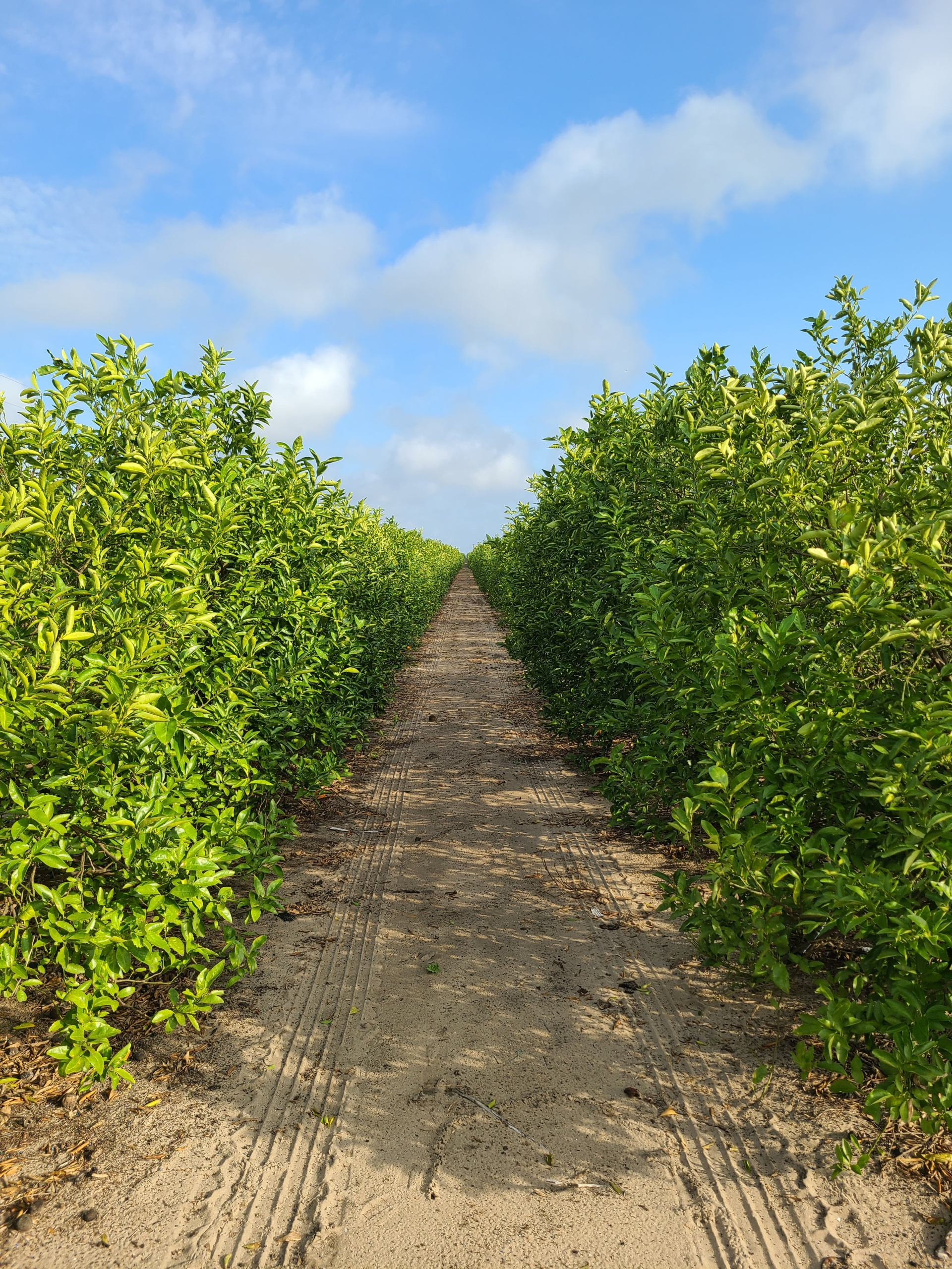 Things To Know About Florida Agriculture