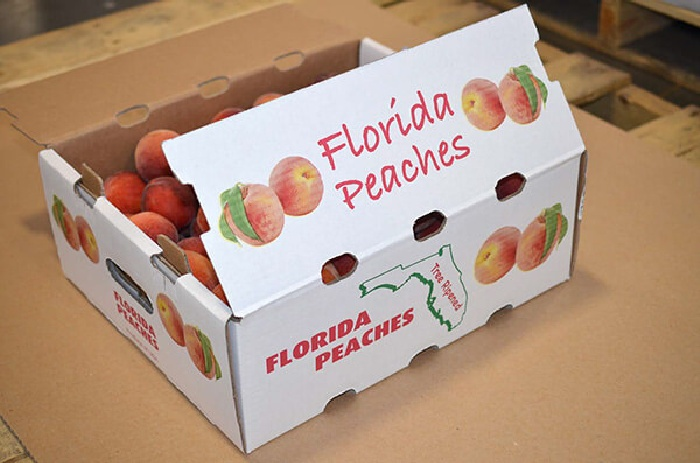 Best Florida Peach Recipes