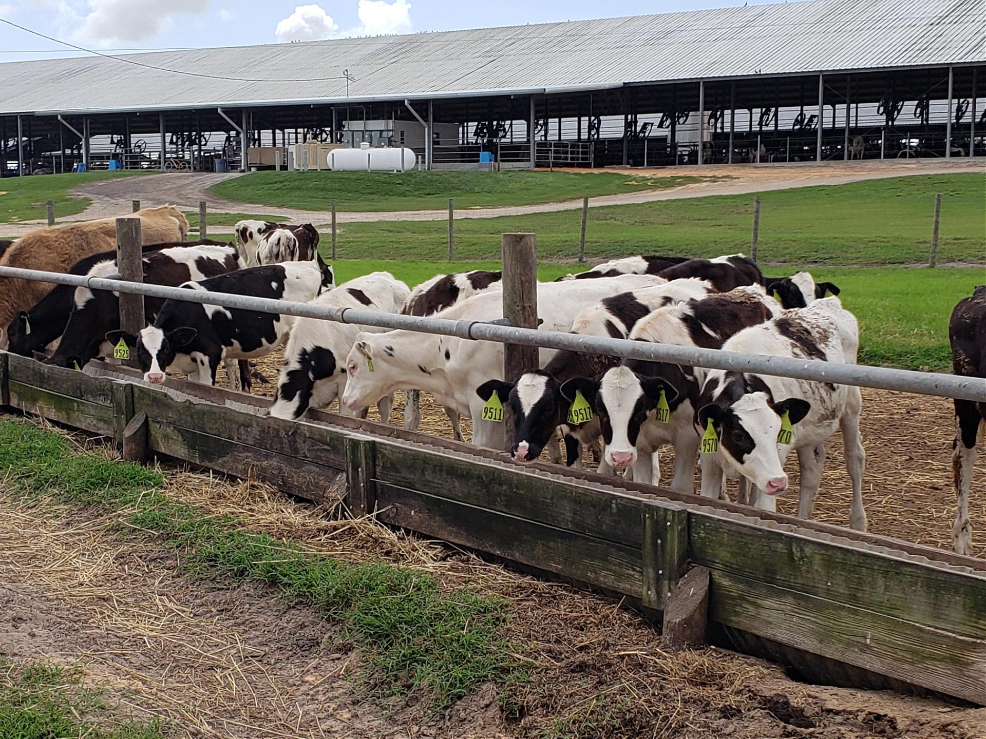 Florida Dairy Faming sustainability