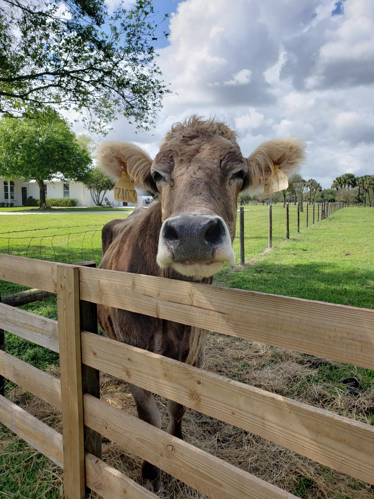 Learn about dairy farming sustainability