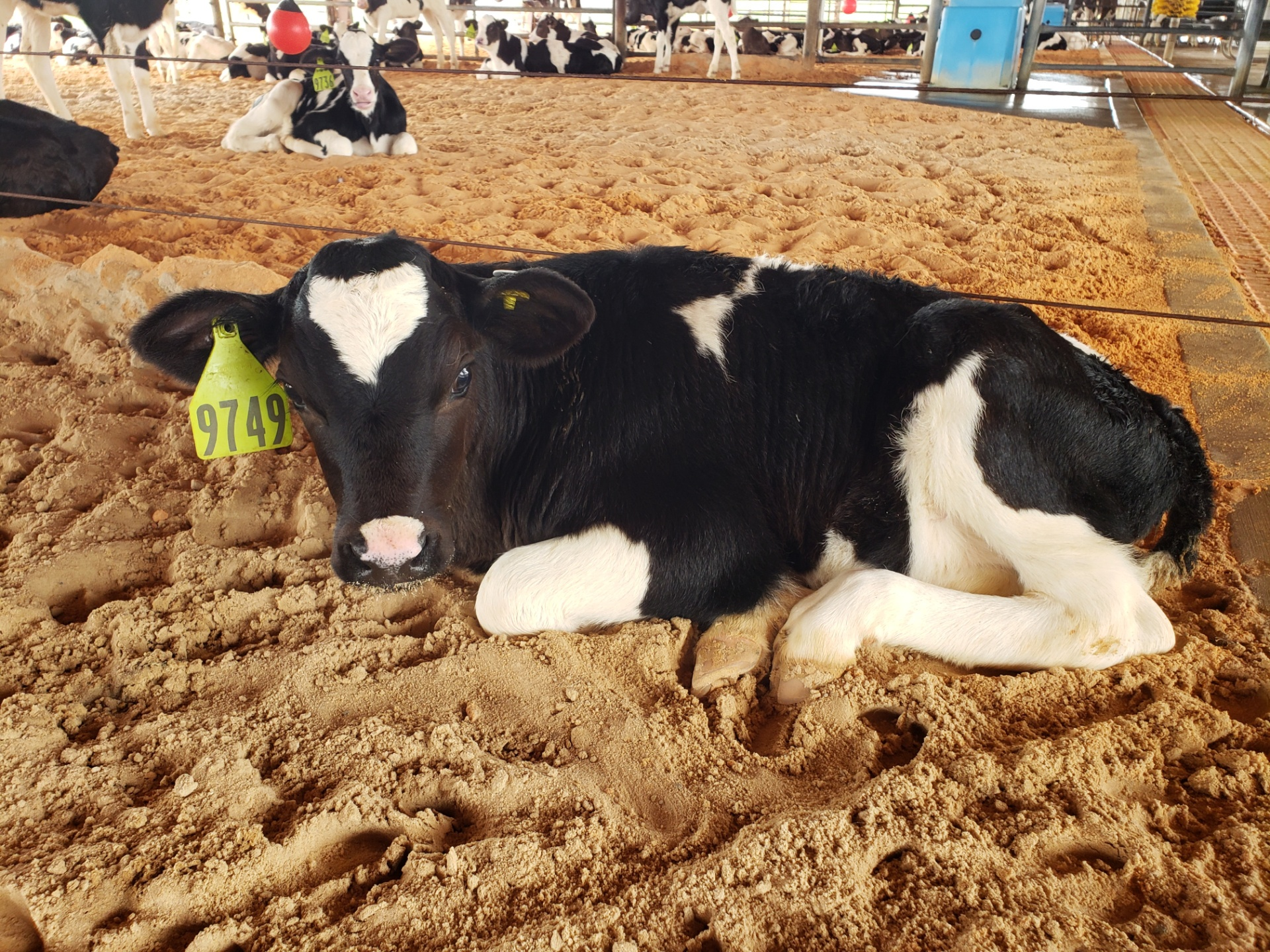 Dairy Faming sustainability