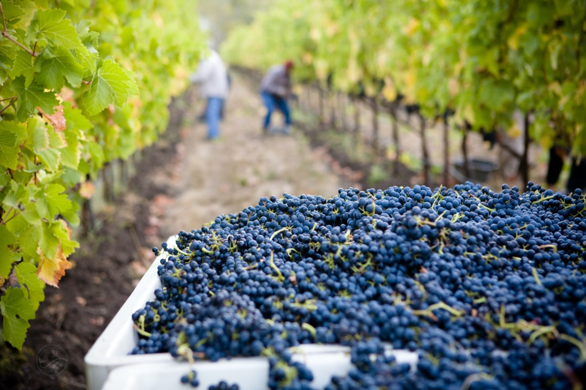best Minnesota wineries to visit