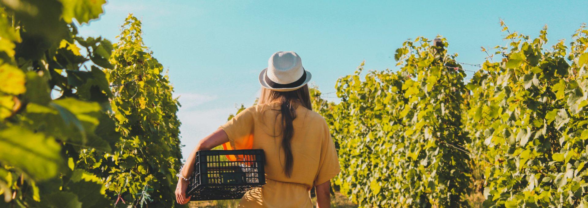 minnesota wineries