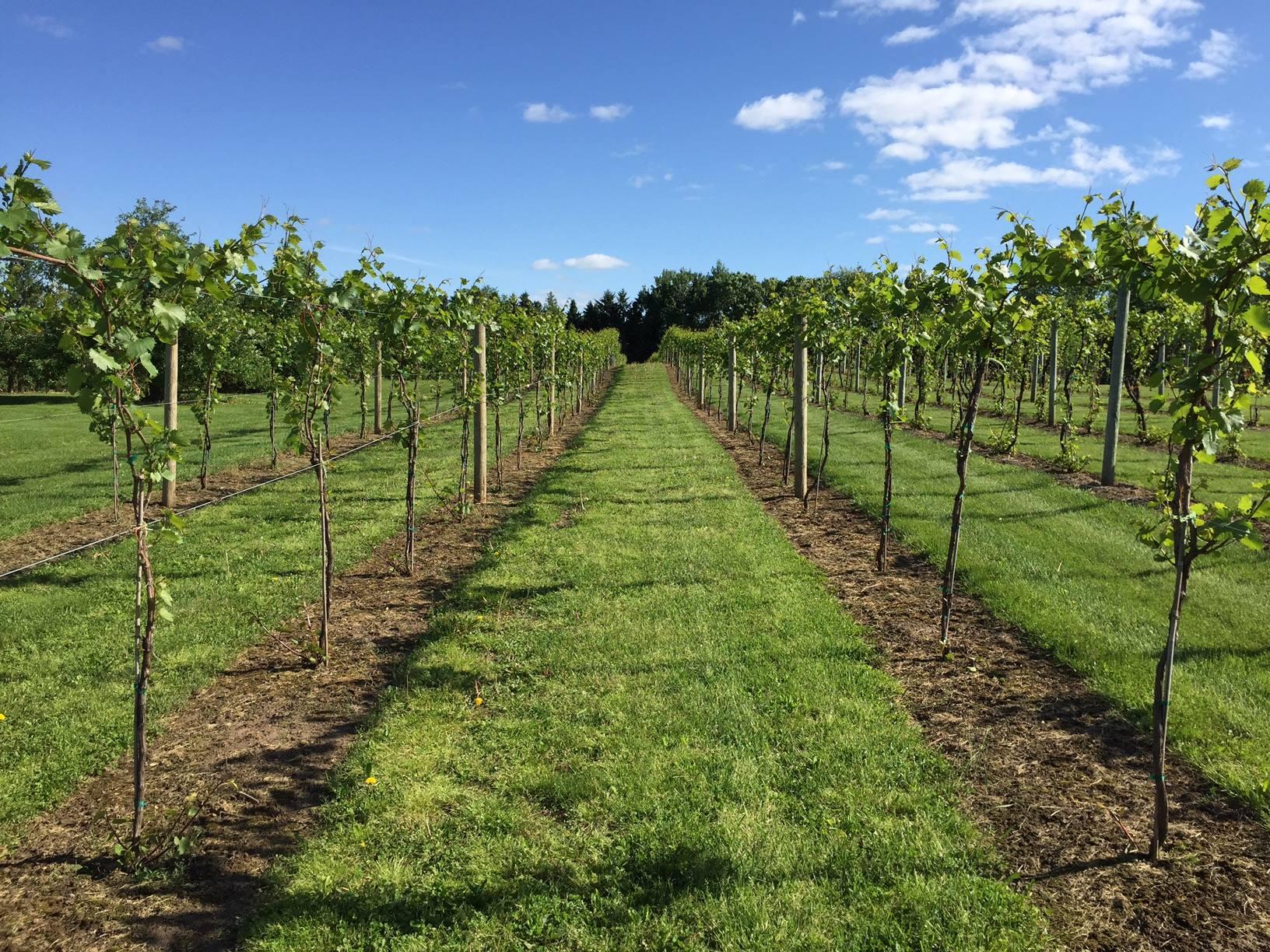 Saint Croix Vineyards
