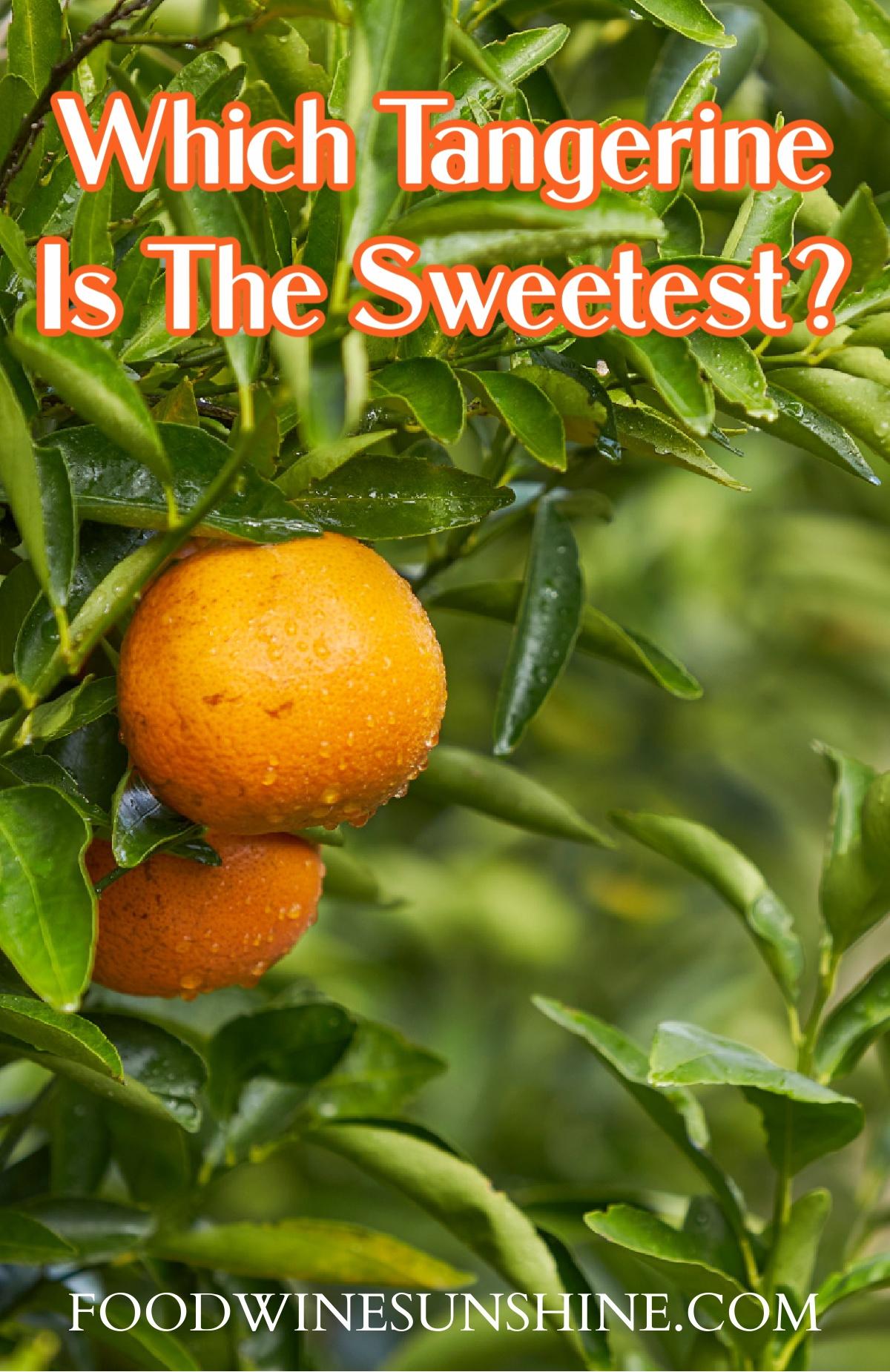 The sweetest tangerine