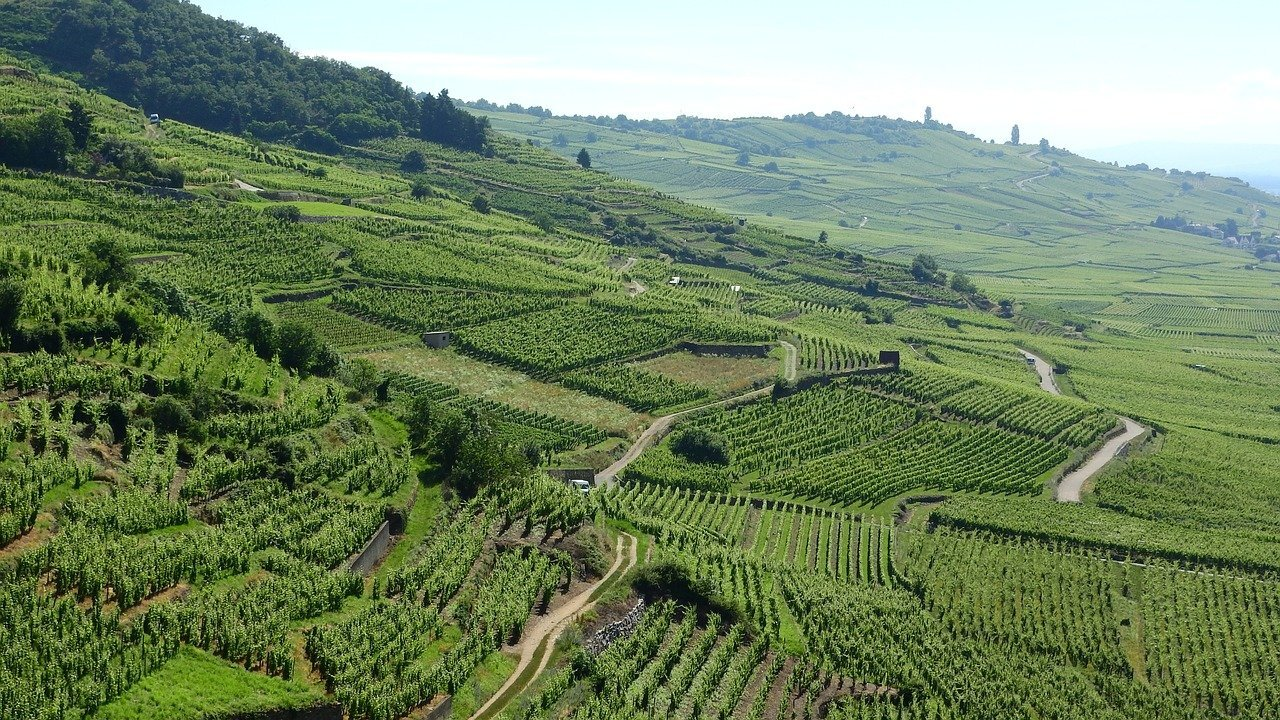 Best Wine Regions in France Alsace