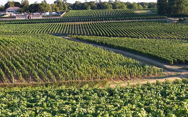 Best Wine Regions in France Bordeaux
