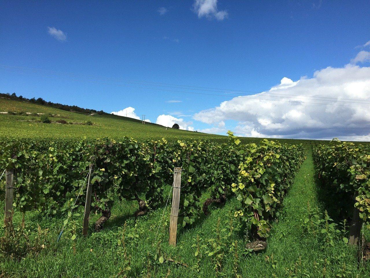 Best Wine Regions in France Burgundy Bourgogne