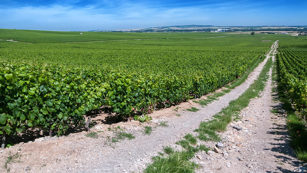 Best Wine Regions in France Champagne