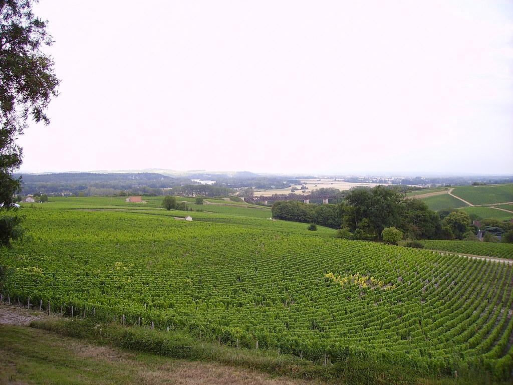 Best Wine Regions in France The Loire Valley